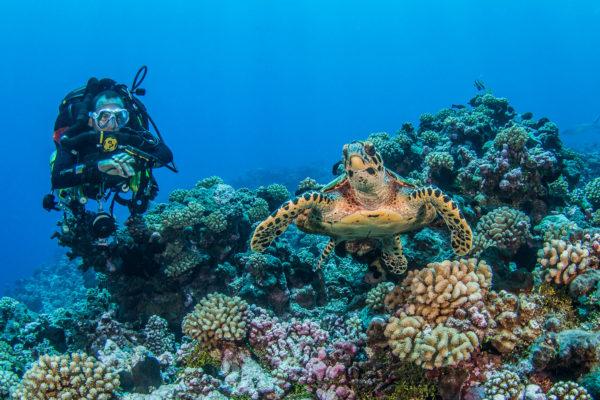 plongee-tekdive-polynesie05