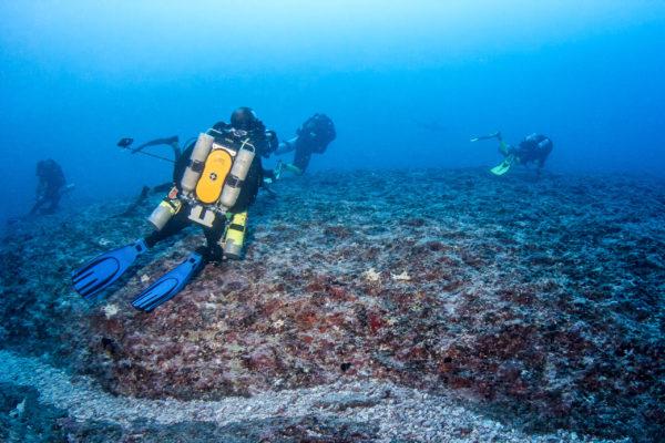 #ccr #rebreather #ccrrangiroa #rangiroa #hammerheadshark #shark